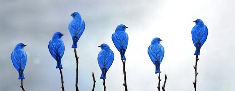 Pubblicità Twitter: 4 consigli preziosi