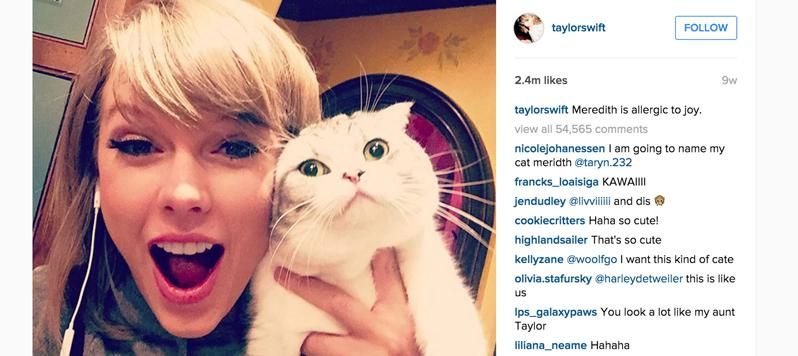 Taylor-Swift-Instagram-Cat