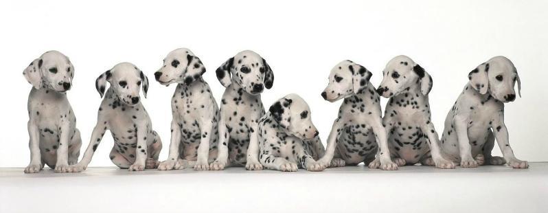 Social media per animali: su BePuppy l'utente è il tuo cane